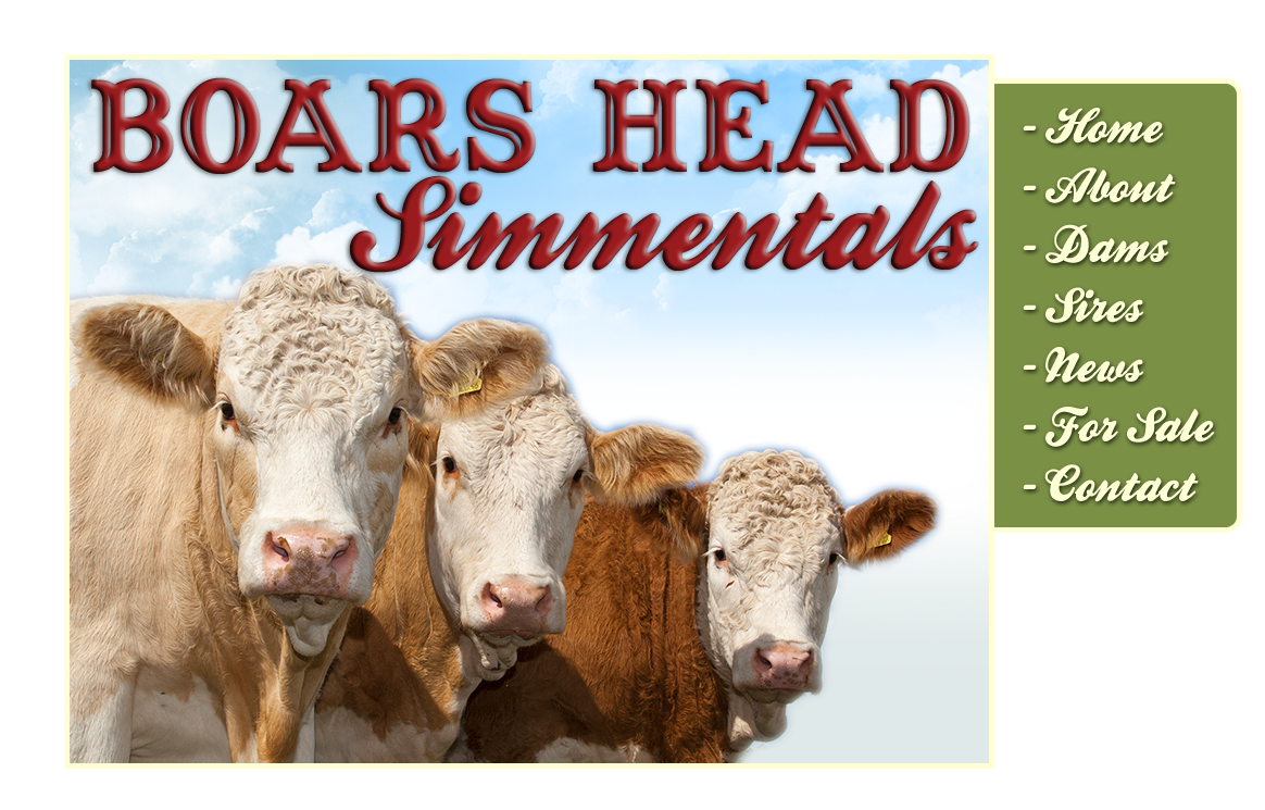 Welcome to the website of Boars Head Simmentals